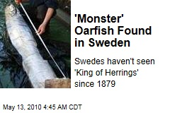 'Monster' Oarfish Found in Sweden