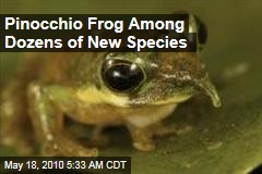 Pinocchio Frog Among Dozens of New Species