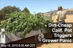 Dirt-Cheap Calif. Pot Triggers Grower Panic