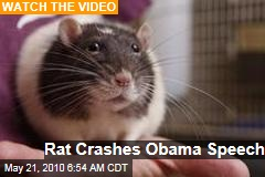 Rat Crashes Obama Speech