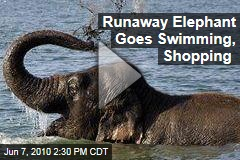 Runaway Elephant Goes Swimming, Shopping