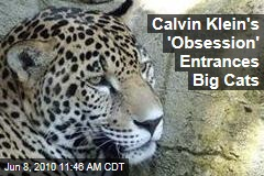 Calvin Klein's 'Obsession' Entrances Big Cats