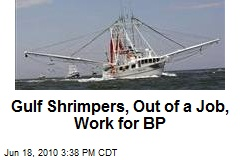 Gulf Shrimpers, Out of a Job, Work for BP