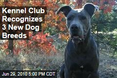 Kennel Club Recognizes 3 New Dog Breeds