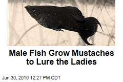 Male Fish Grow Mustaches to Lure the Ladies
