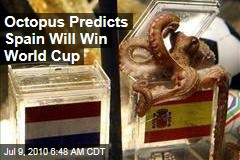 Octopus Predicts Spain Will Win World Cup