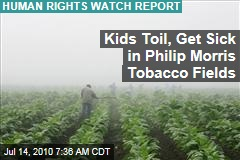Kids Toil in Philip Morris' Tobacco Fields