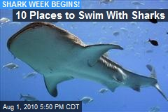10 Places to Swim With Sharks