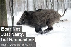 Boar Not Just Nasty, but Radioactive