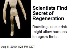 Scientists Find Secret of Regeneration