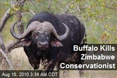 Buffalo Kills Zimbabwe Conservationist