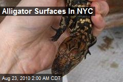 Alligator Surfaces In NYC