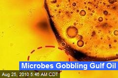 Microbes Gobbling Gulf Oil