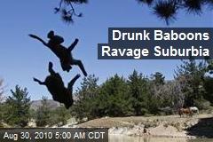 Drunk Baboons Ravage Suburbia