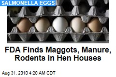 FDA Finds Maggots, Manure, Rodents in Hen Houses