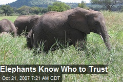 Elephants Know Who to Trust